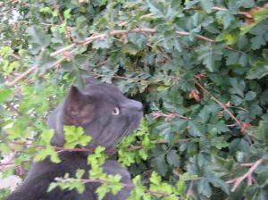 Diana Cat 4